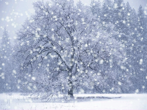 winter-photos1.png