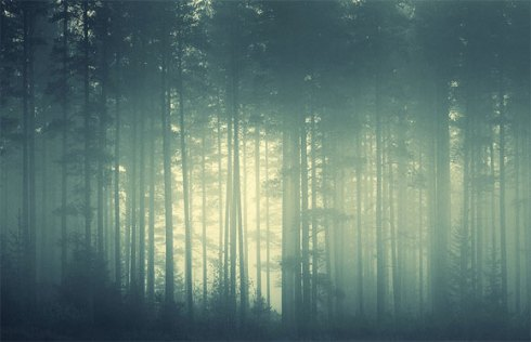 46-foggy-forest